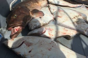 halibut pile